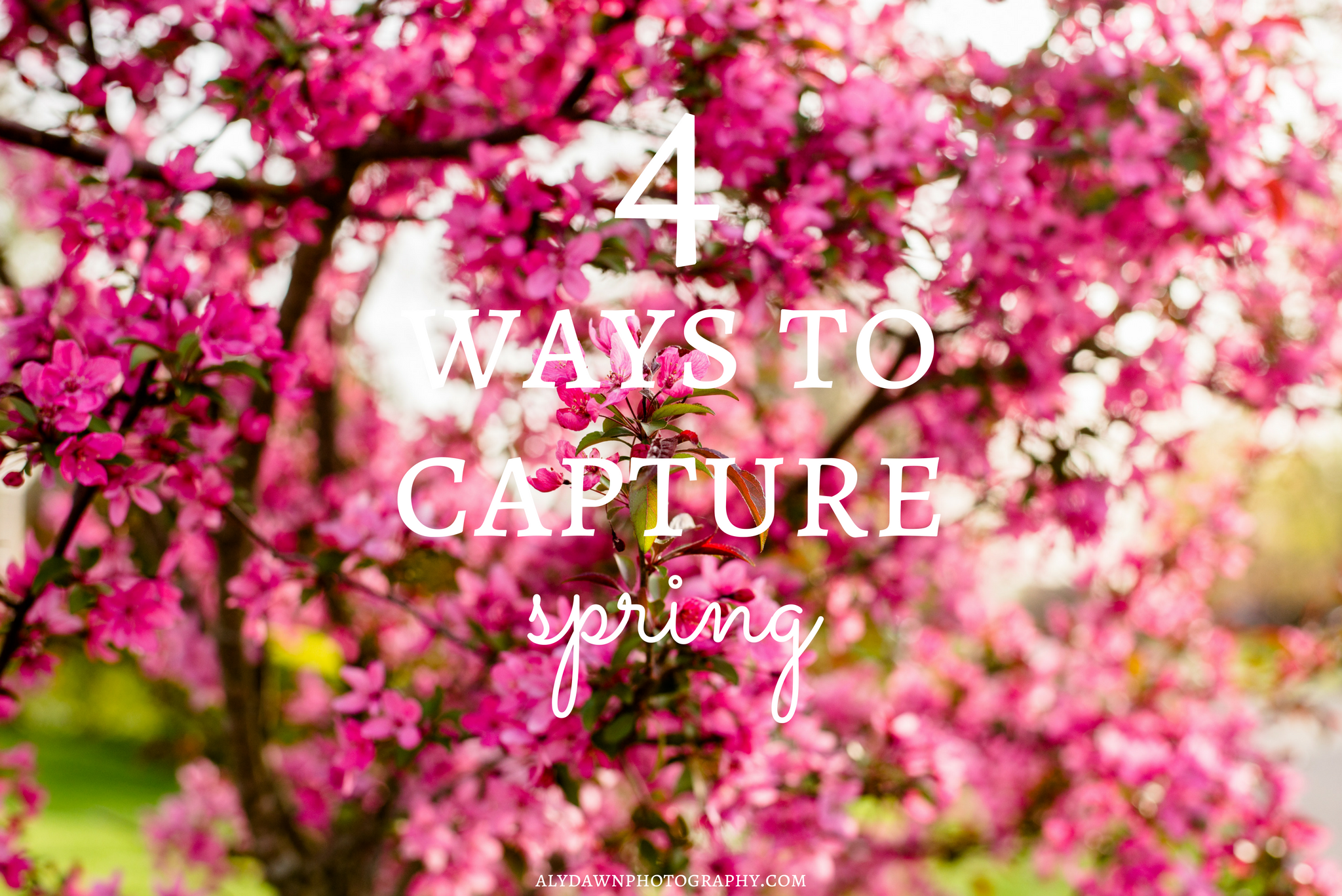 4 Ways to Capture Spring